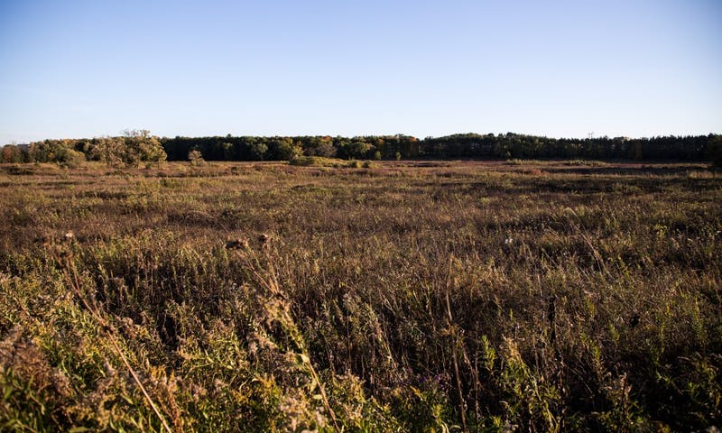 A recent study by UW-Madison graduate student Amy Alstad reexamined the changes in Wisconsin prairies.