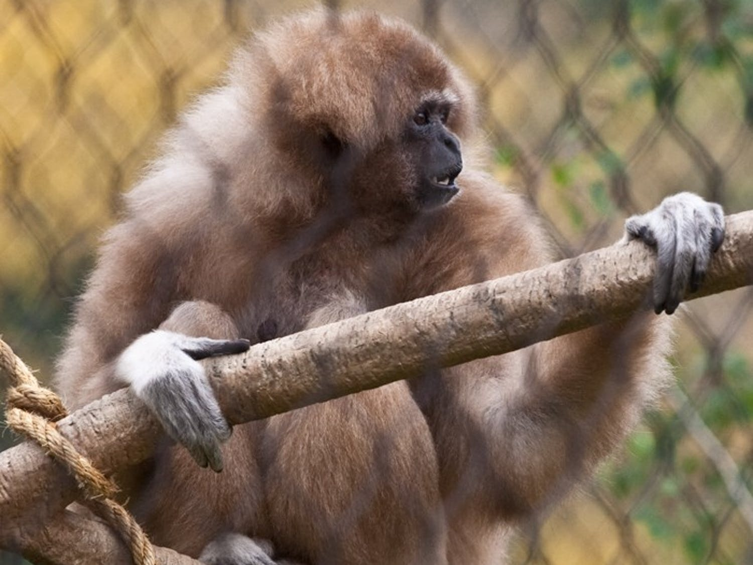 Primate researcher's rights violated, says faculty report
