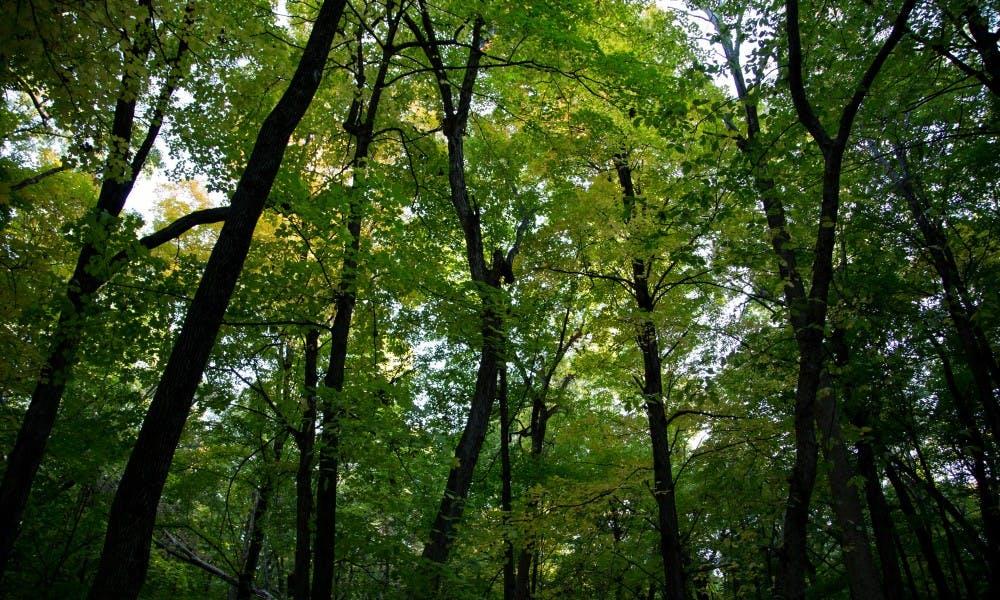 fall, arboretum