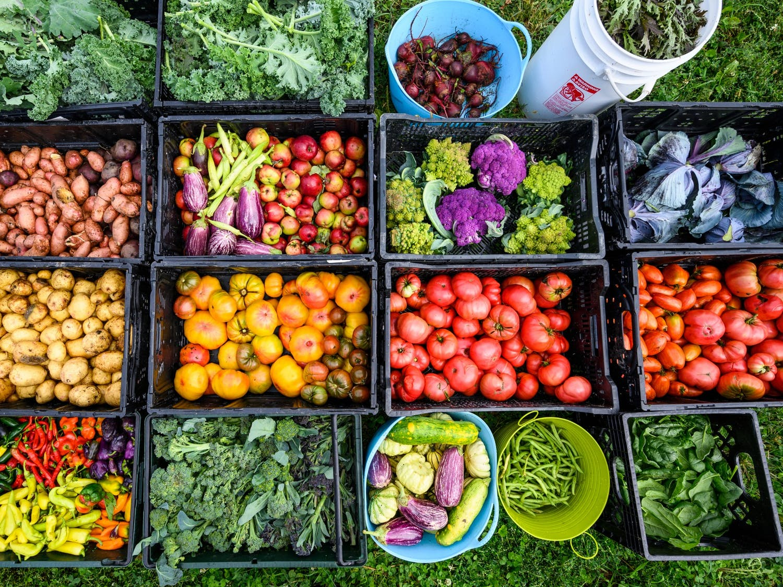 """Healthy food harvest"""
