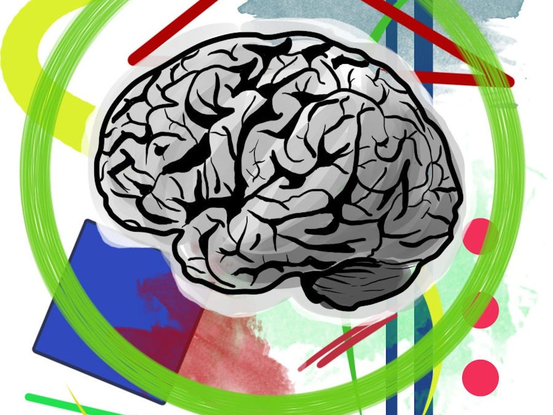 Neuroaesthetics brain