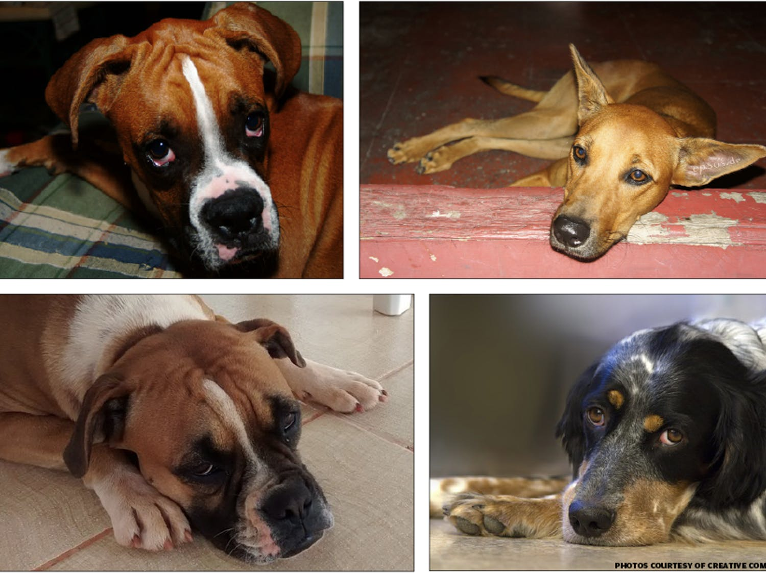 Who made these dogs so sad?