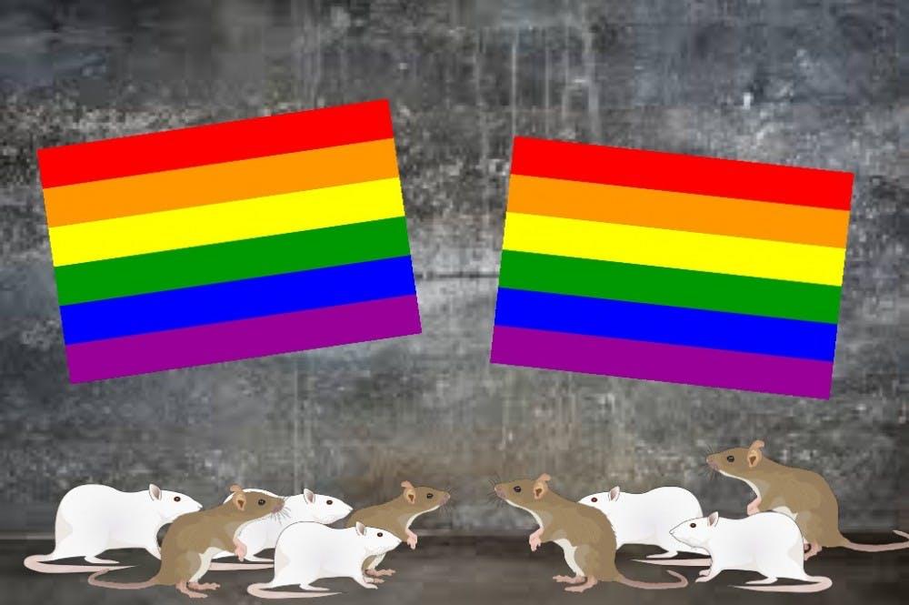 gayratwedding