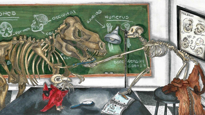 skeleton-graphic