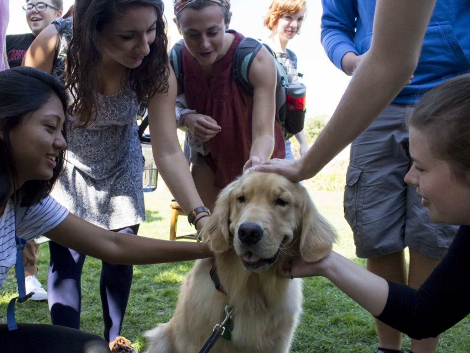 A new student org is helping connect sexual assault survivors with support dogs.