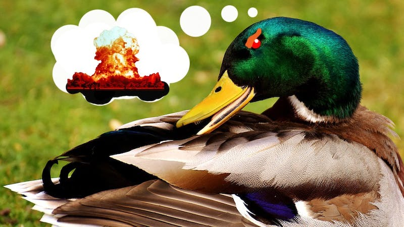 A local newly-superior mallard aspires to be the scourge of humanity.