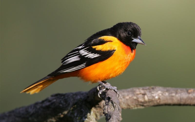 The next time you step outside, chances are you'll come across a bird of some kind.