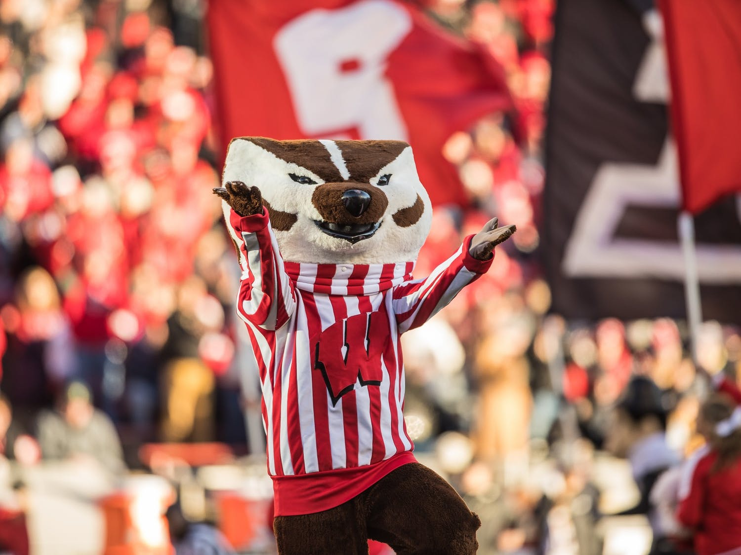 As much as we'd all love to see Bucky back on the field in the fall, it probably isn't safe.