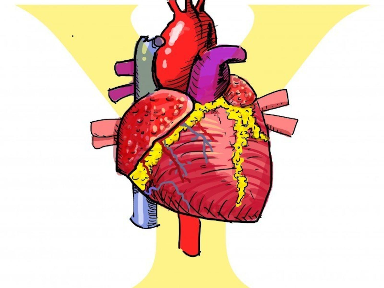 Y heart
