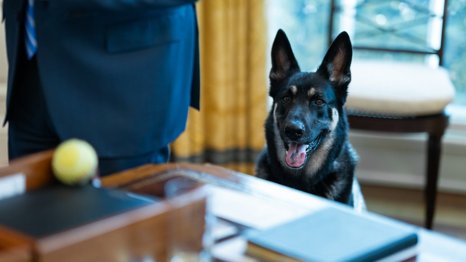 Photo of President Biden's dog, Major.