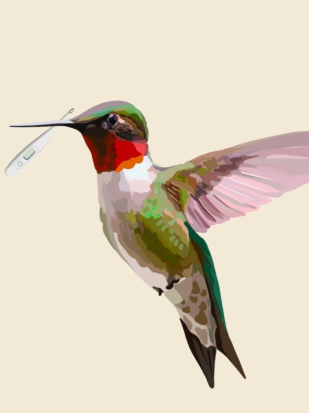HummingBirdGraphic.jpg