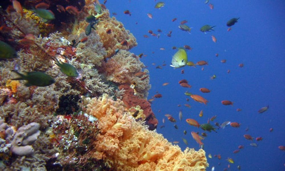 Photograph of fish swimming through a coral reef