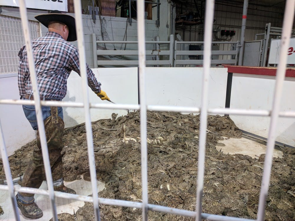 <p>At the Rattlesnake Roundup festival in Sweetwater, Texas that encourages participants to catch snakes, over 4,000 pounds of rattlesnake had been caught by noon on the first day of this year's festivities.</p>
