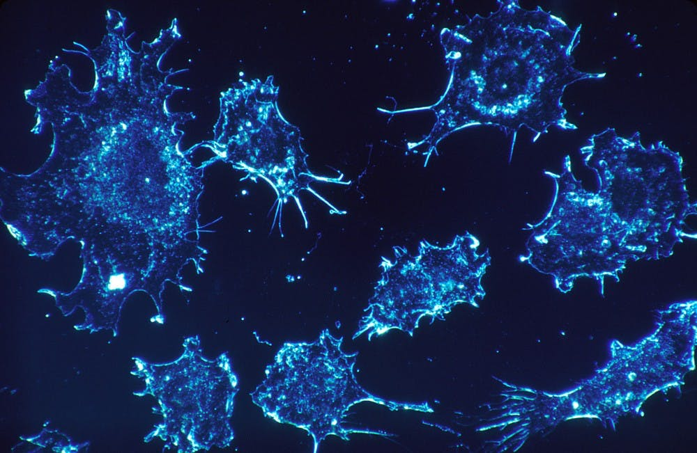 <p>Tumors can evolve and disseminate in a rapid and uncontrolled fashion.&nbsp;</p>