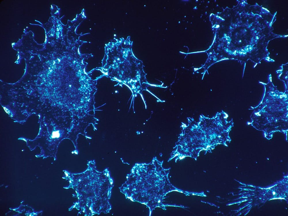 Tumors can evolve and disseminate in a rapid and uncontrolled fashion.