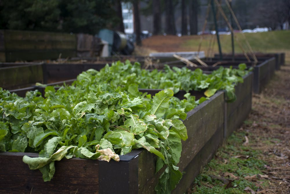 <p>Bingham spoke to how volunteering to weed and grow food in community gardens can promote food justice for underserved communities in the Charlottesville area.</p>