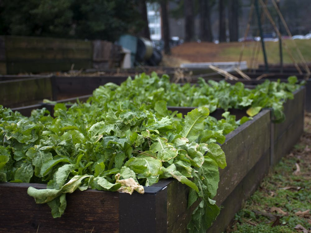 Bingham spoke to how volunteering to weed and grow food in community gardens can promote food justice for underserved communities in the Charlottesville area.