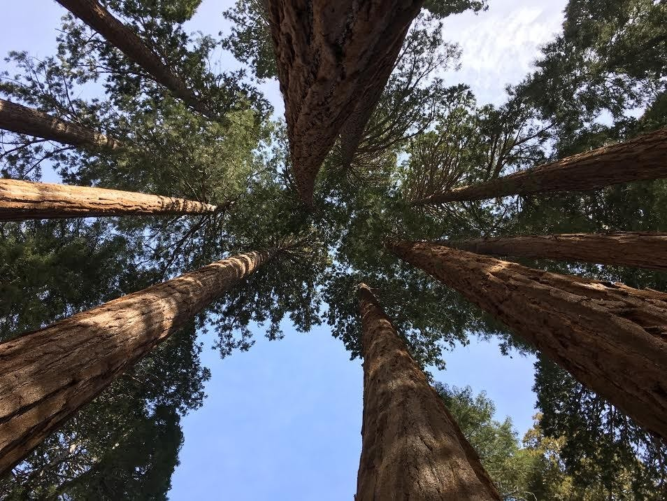 trees-benjamin hitchcock