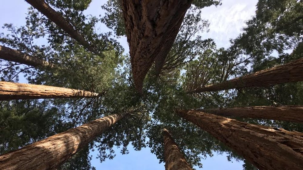 I spent last week in the shadows of Sequoia trees.