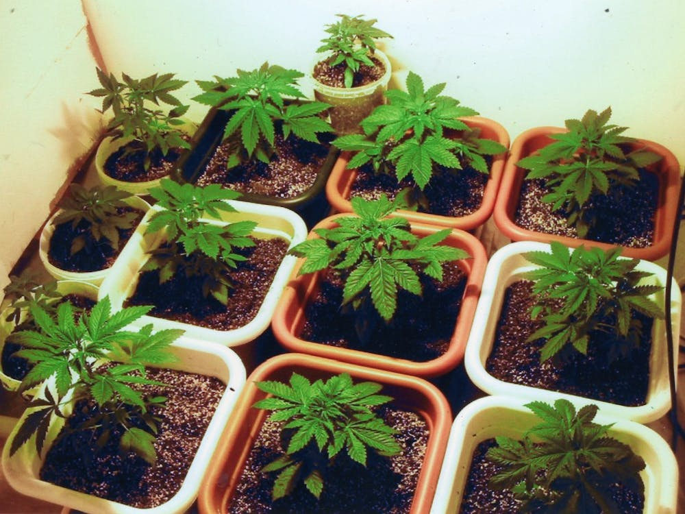 According to the National Survey of Drug Use and Health, 52 percent of all people 18 to 25 used marijuana in 2012.