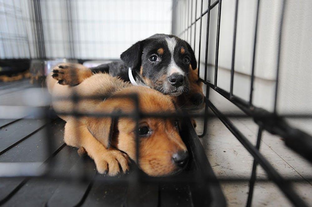 op-puppiesinshelter-courtesyfemaphotolibrary