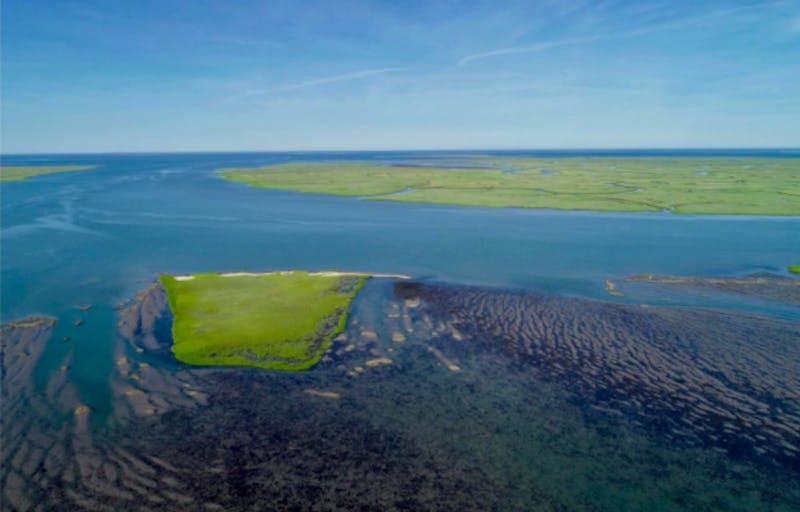 U.Va. researchers successfully restore marine seagrass meadows off Virginia's eastern shore - University of Virginia The Cavalier Daily