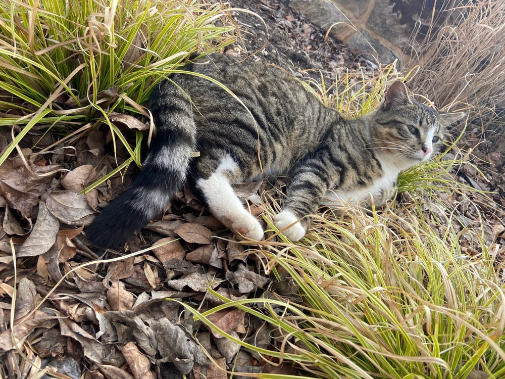 <p>This new cat is becoming a first-year favorite.</p>