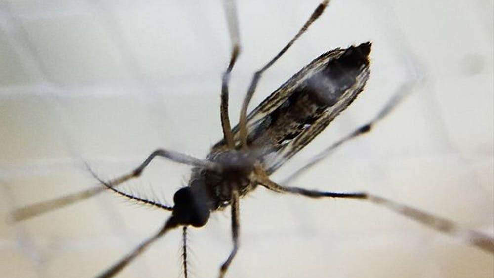 Zika virus is carried by Aedes mosquitos, but people who contract it can also transmit it sexually.