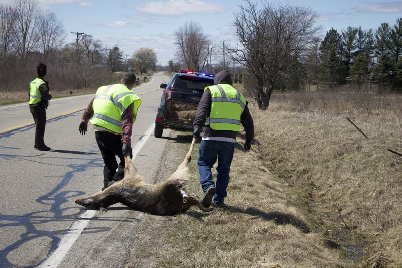 roadkill removal.jpg