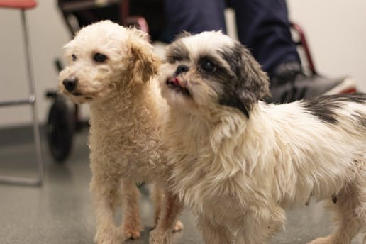 Central Michigan Life - Finding Forever Homes: Dogs seized from