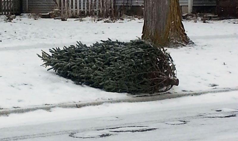 Christmas Tree Pickup.jpg