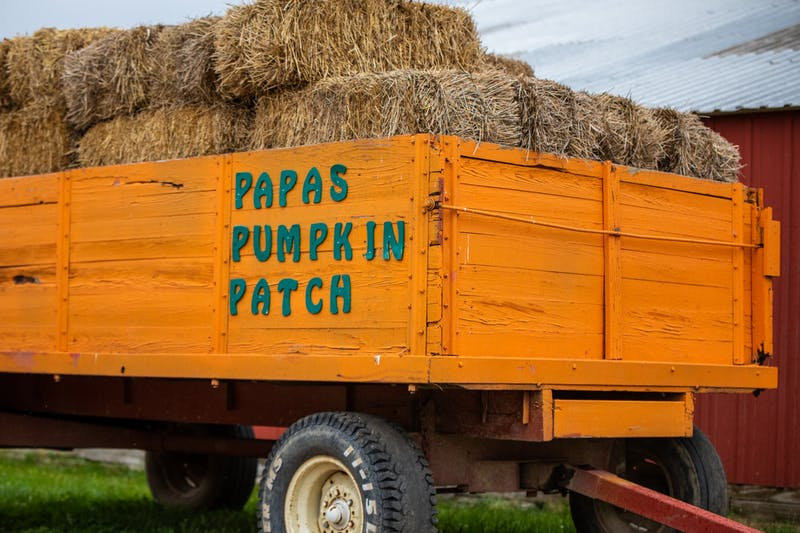 Pumpkin Patch.jpeg
