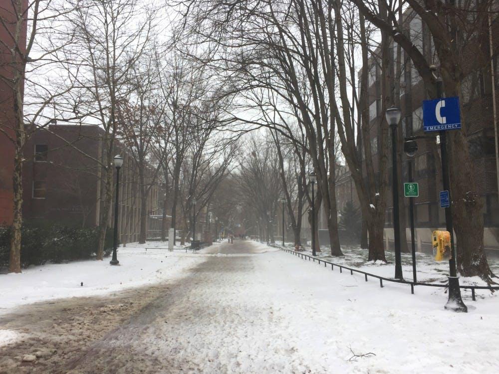 snow locust.jpg