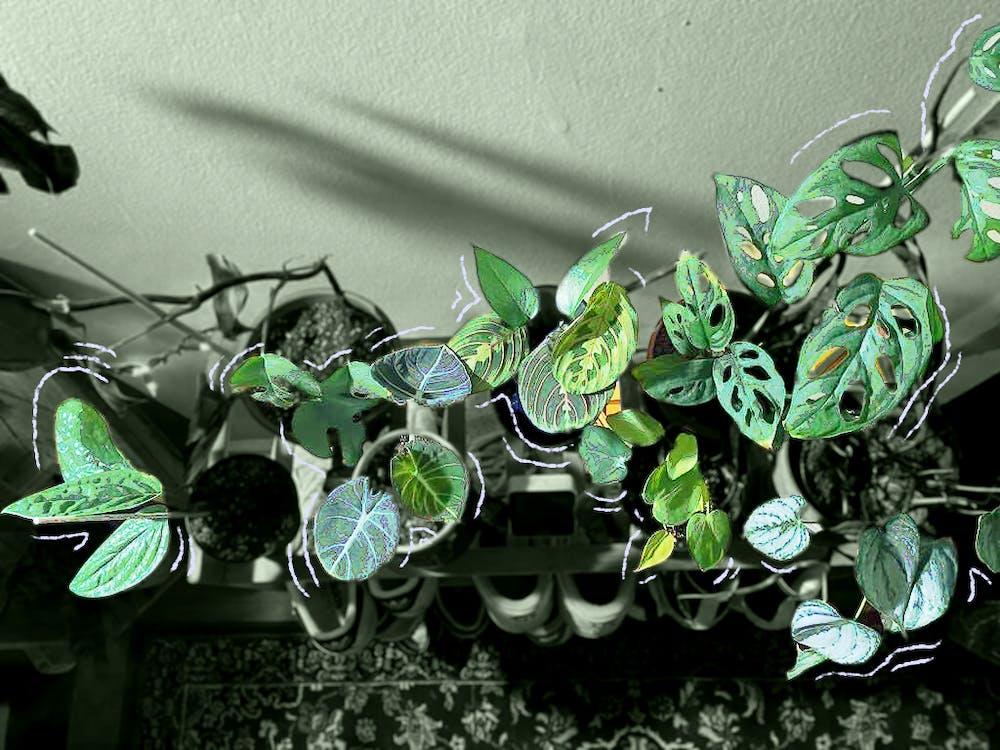 34st_plant_edit.png