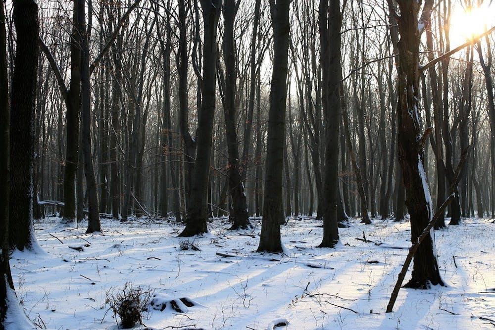 Sky Nature Trees Light Walk Winter Gray Snow