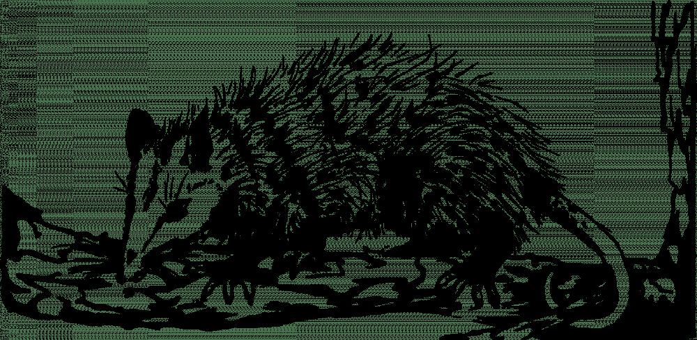Opossum2-2400px.png