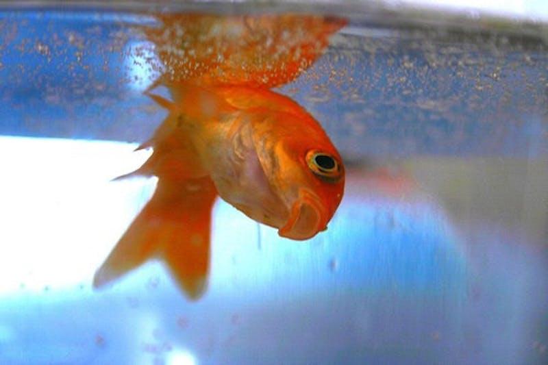 Jenna Still Haunted by Guilt From Leaving Fish in Dorm for Spring Break