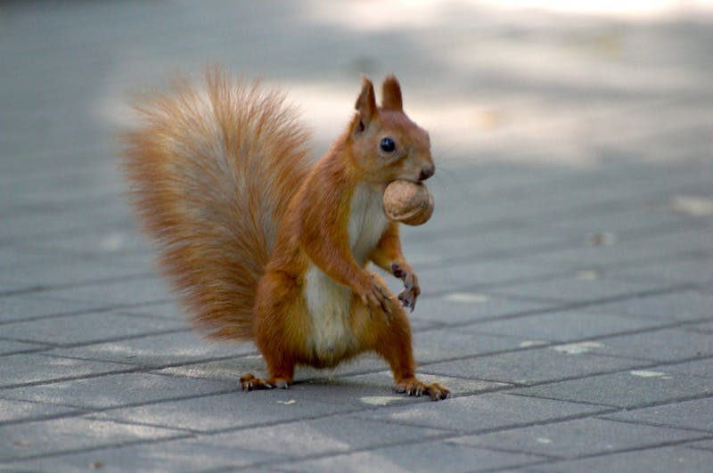 Squirrels Excited for No Nut November