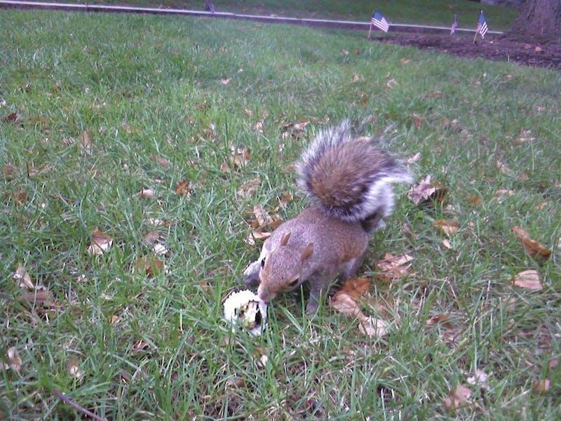Penn Girls Squirrels Love Sushi