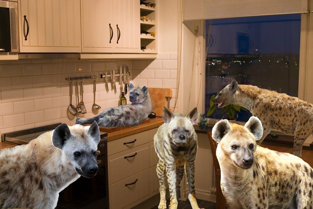 hyenaparty