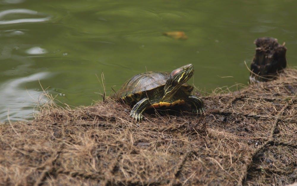 53817_turtlef