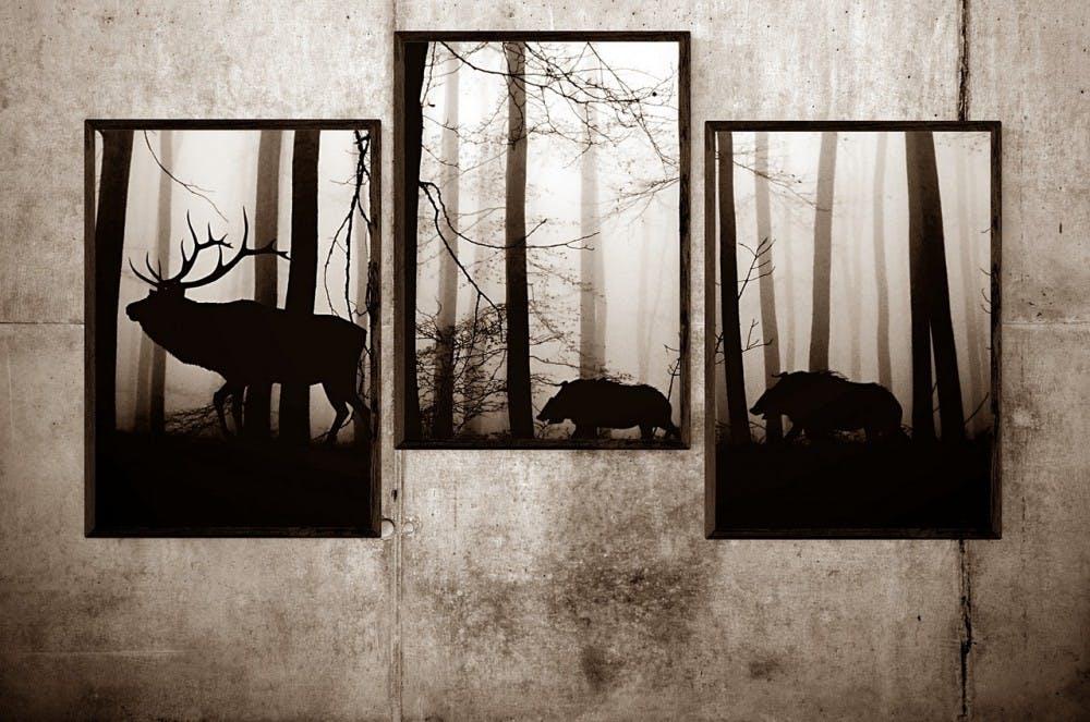 image-photo-picture-frame-framed-forest-set-wild-3019234