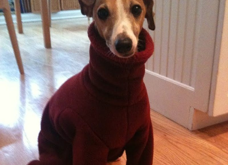 My Dog Hates ISIS, but You Don't See Him Bragging About It