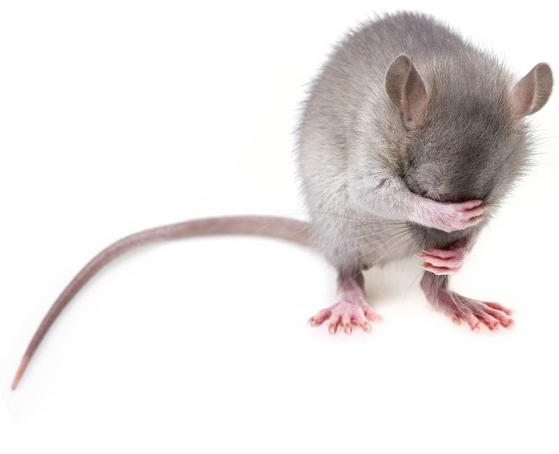 OP-ED: The Mouse in My Apartment Doesn't Pay Rent so I'm Going to Murder Her and Her Entire Family