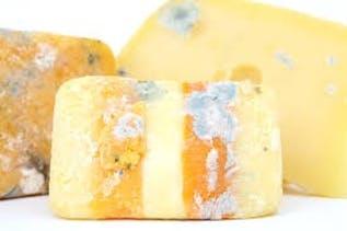 moldy cheese.jpeg