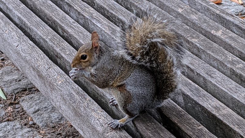 New $200m Quad Renovation Will Make Buildings More Livable for Squirrels
