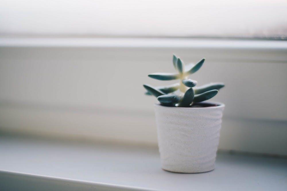 succulent_sublet
