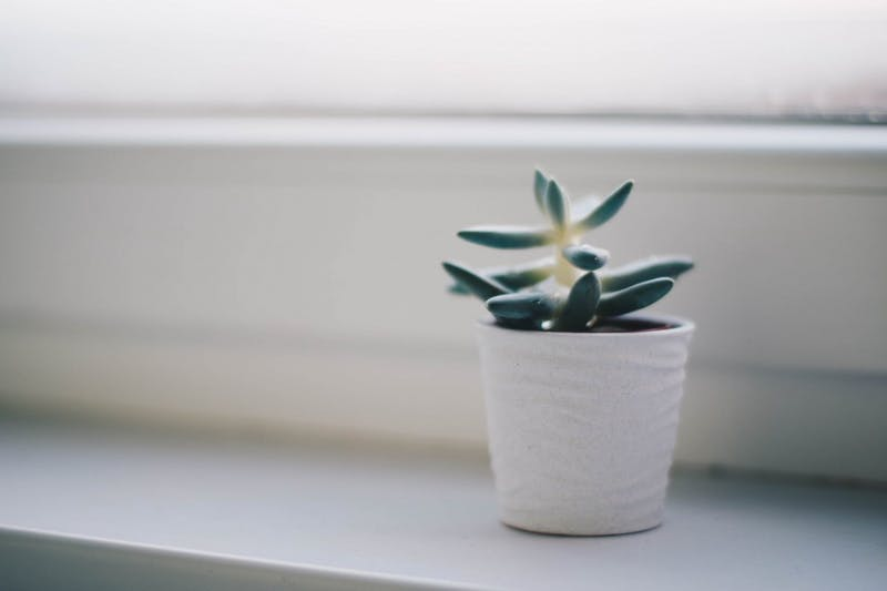 CHEAPEST SUBLET EVER: I Will Let You Live in My Apartment for Free If You Water My Plant
