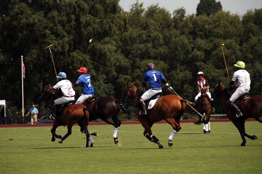 polo-competition-equestrian-england-summer-horses-2446659