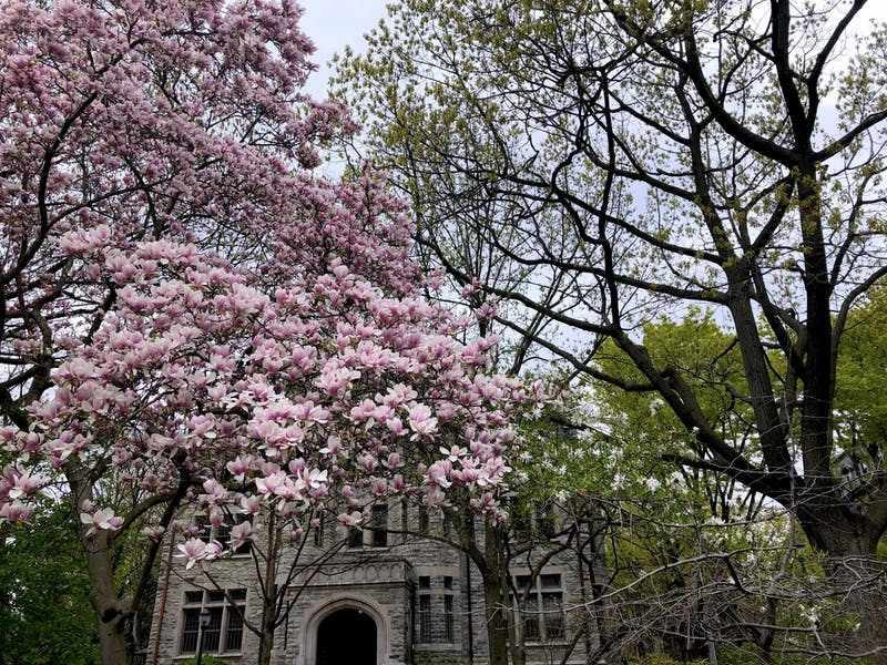 Student Stumbles Upon New Species of Locust Walk Tree